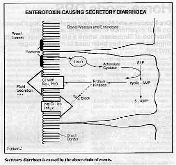 Secretoire diarree